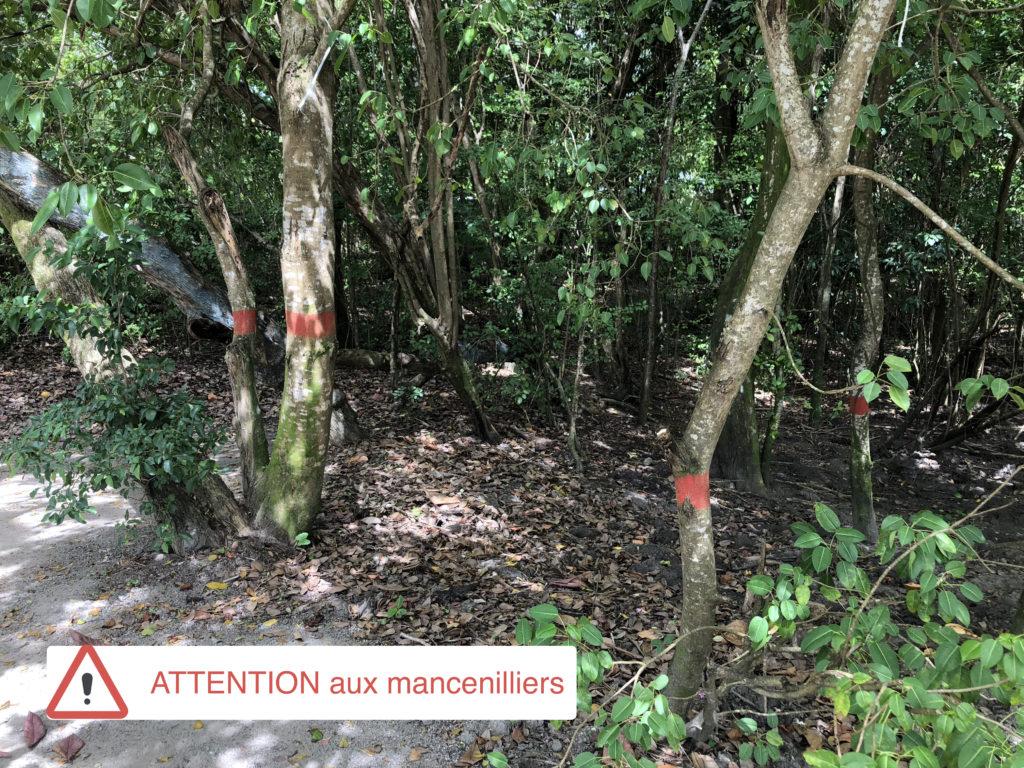 dangers Martinique