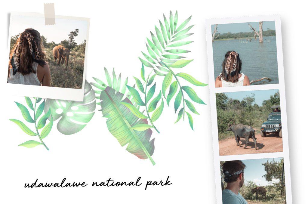 safari udawalawe