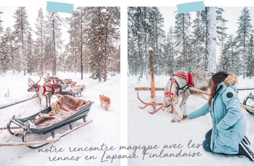 élevage de rennes Laponie