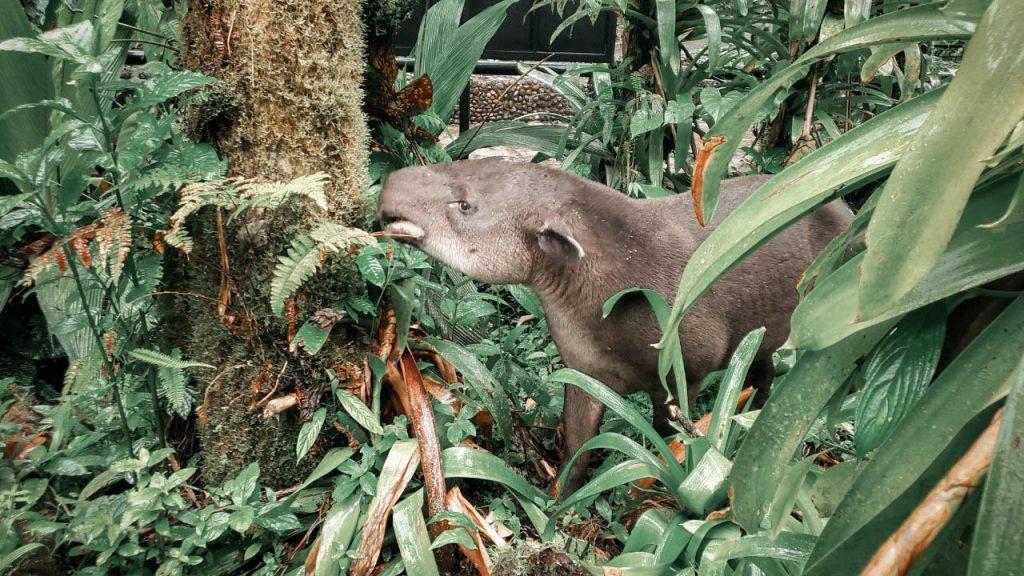 Corcovado parc Costa Rica